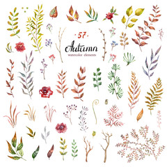 vector set of red autumn watercolor leaves and berries, hand drawn design elements