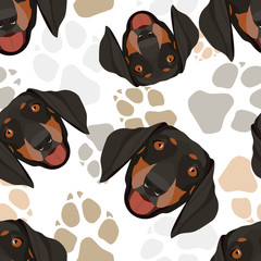 Muster Hundepfoten Dackel