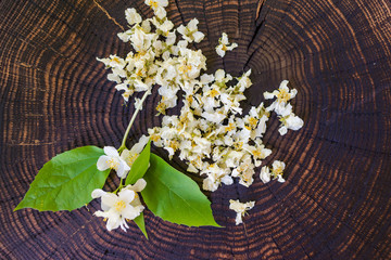 Dried  blossoms and sprig of jasmine on wooden board