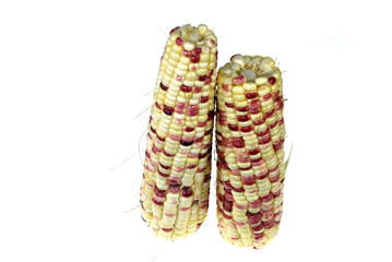 Wall Mural - colorful corn cob isolated on white background
