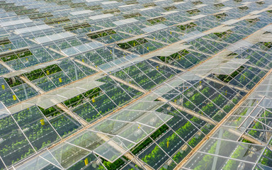 Fototapeta Greenhouses with vegetables obraz