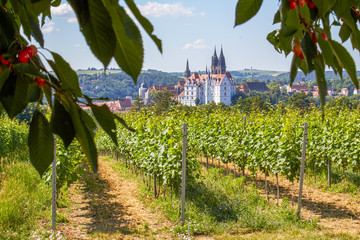 German wine-growing region in Saxony on the southern slope of the Elbe with a beautiful view of the Albrechtsburg Meissen and the cathedral Wall mural