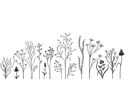 Set of field plants. Black and white illustration.