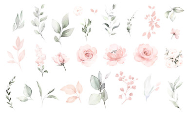 Set watercolor elements of pink roses; collection garden flowers; leaves; branches. Botanic; illustration, eucalyptus; Wedding floral design