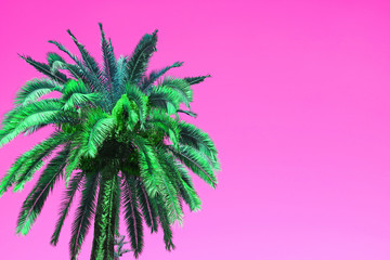 Pop Art Style Vibrant Green Palm Tree on Vivid Pink Background with Copy Space