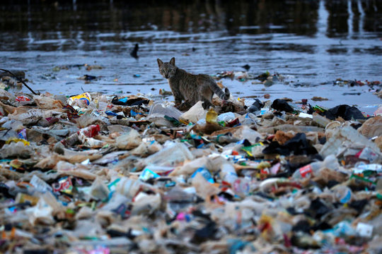 A cat is seen among rubbish at a shoreline in Jakarta