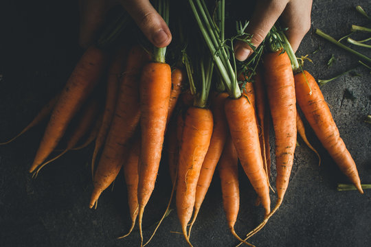 Organic Carrots in Female Hands. Fresh Healthy Eating Concept.