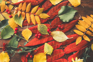 Autumn foliage. Collection of colorful fall leaves, red berries and flowers on brown wooden background.