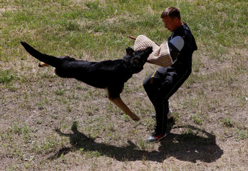 A German shepherd dog attacks a trainer during the annual cynologist competition for teams of the Federal Penitentiary Service, outside Krasnoyarsk