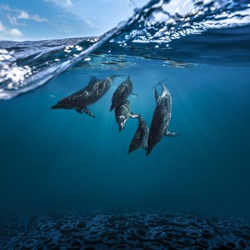 Underwater view of dolphins
