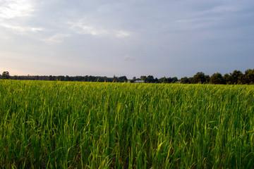 Łąka latem i wiosną
