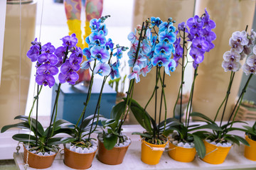 orchid branch with blue flowers