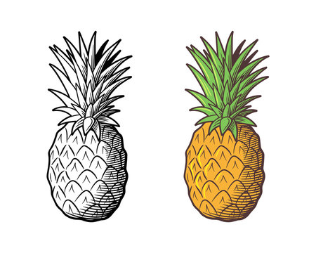 Retro style illustration of pineapple. Outline and colored version. Vector drawing, isolated on white background