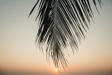 Beautiful tropical coconut palm branch with colorful sunset. Minimalistic background with vintage tone filter. Summer, travel and adventure concept.