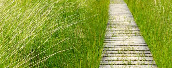 Feld, Holzweg, Gras