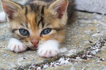 A little stray kitten with sad eyes.