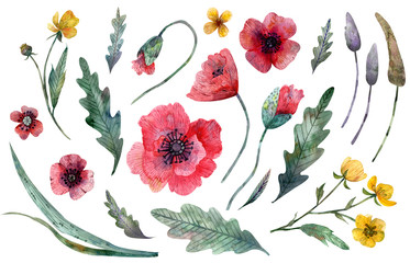 Watercolor illustration of wild flowers clipart isolated on white background.