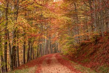 Keuken foto achterwand Weg in bos Camino en el bosque otoñal. Bosque Irati.