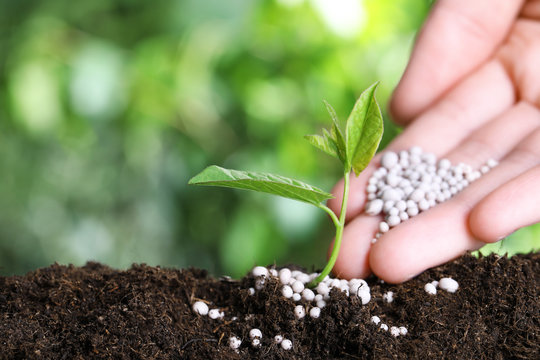 Woman fertilizing plant in soil against blurred background, closeup with space for text. Gardening time