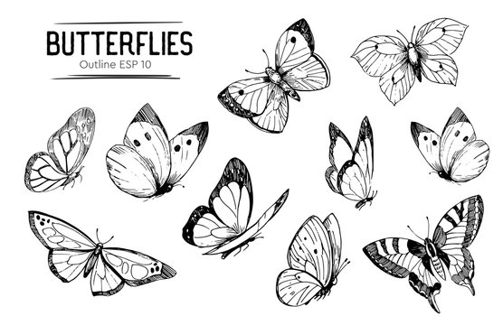 Set of butterflies outlines. Hand drawn illustration converted to vector