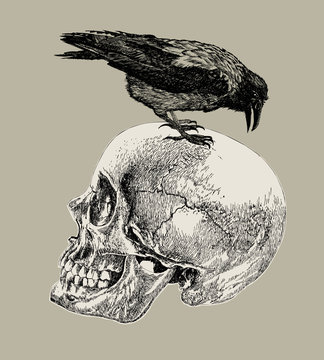 Raven on a human skull. Hand drawing, vector illustration.