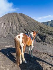 Horse at Bromo Tengger Semeru National Park in Java, Indonesia