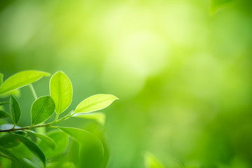 Closeup nature view of green leaf on blurred greenery background in garden with copy space for text...