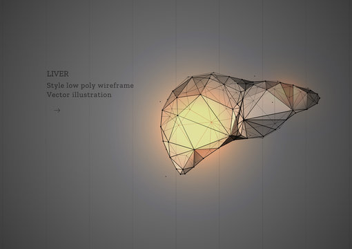 Liver organ. Low poly wireframe style. Technology in medicine. Abstract illustration isolated on gray background. Particles are connected in a geometric silhouette