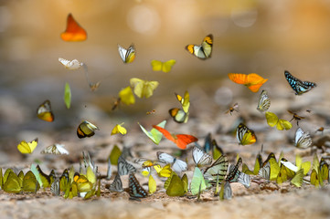 The beauty of many butterflies in nature