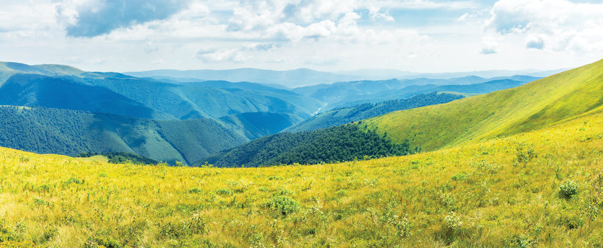 wonderful summer panorama in mountain. green grassy slopes of alpine meadows covered in european blueberry plant beneath a blue sky with fluffy clouds. sunny weather. wonderful weekend