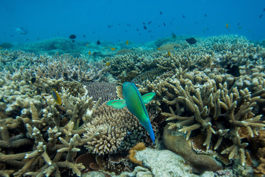 Tropical Island Reef Diving
