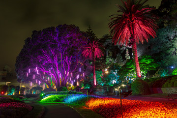 Botanic garden illuminated with artificial lights Wall mural