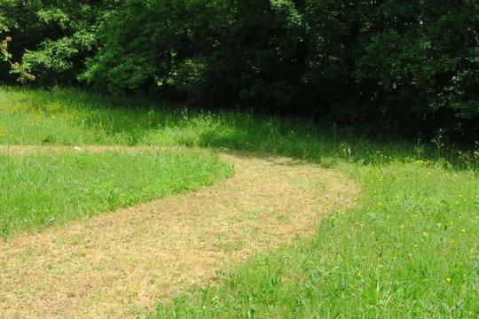 Chemin courbe à travers la pelouse, jardin vert.
