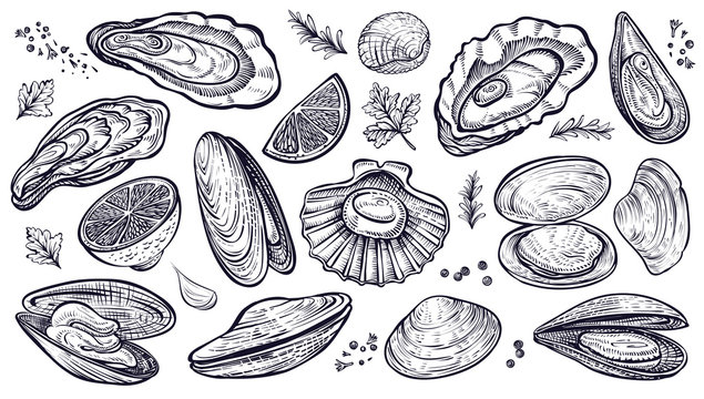 Shellfish seafood, vector hand drawn set. Oysters, mussels, scallop and other.