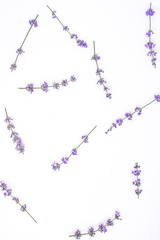 Fresh lavender flowers arranged on a white background. Lavender flowers mock up. Copy space. Minimal background concept.