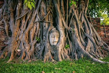 Wall Mural - Buddha head in fig tree at Wat Mahathat, Ayutthaya historical park, Thailand.