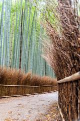 Bamboo forest at Arashiyama, Kyoto , Japan
