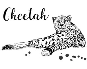Hand drawn sketch style cheetah isolated on white background. Vector illustration.