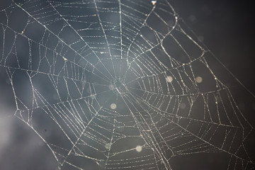 Spiderweb on dark background in front of pond