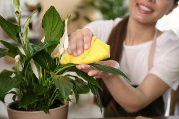 Young woman taking care of potted plant at home, closeup