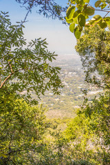 View between trees and plants from Table Mountain National Park in Cape Town to the Claremont area in South Africa.