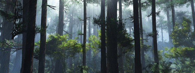 Trees in the fog. The smoke in the forest in the morning. A misty morning among the trees. 3D rendering Fotomurales