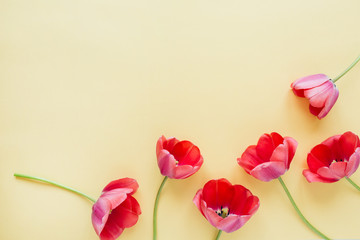 Colorful tulip flowers on pastel background. Flat lay, top view minimal summer floral pattern composition.