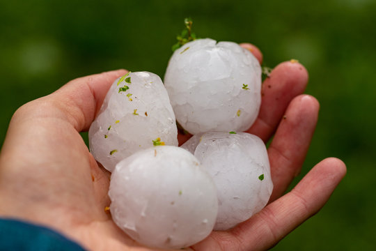 Huge hailstones after a severe thunderstorm in the hand of a young woman.