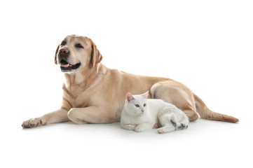 Adorable dog and cat together on white background. Friends forever