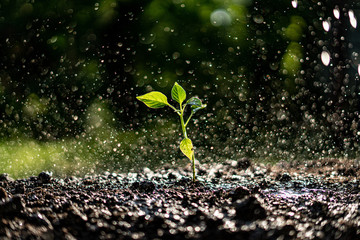 small young plant sprout under the strong heavy rain Wall mural