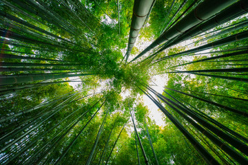 Keuken foto achterwand Bamboo Bamboo forest at the traditional guarden. Kamakura district Kanagawa Japan - 04.28.2019 camera : Canon EOS 5D mark4
