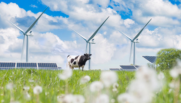 solar cell and cow