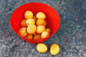 ripe yellow apricots in a red plastic bowl on a large stone in the rays of the setting sun