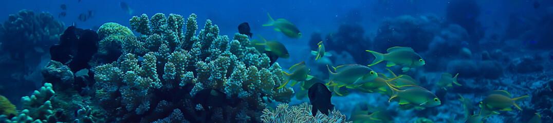 Keuken foto achterwand Koraalriffen coral reef underwater / lagoon with corals, underwater landscape, snorkeling trip